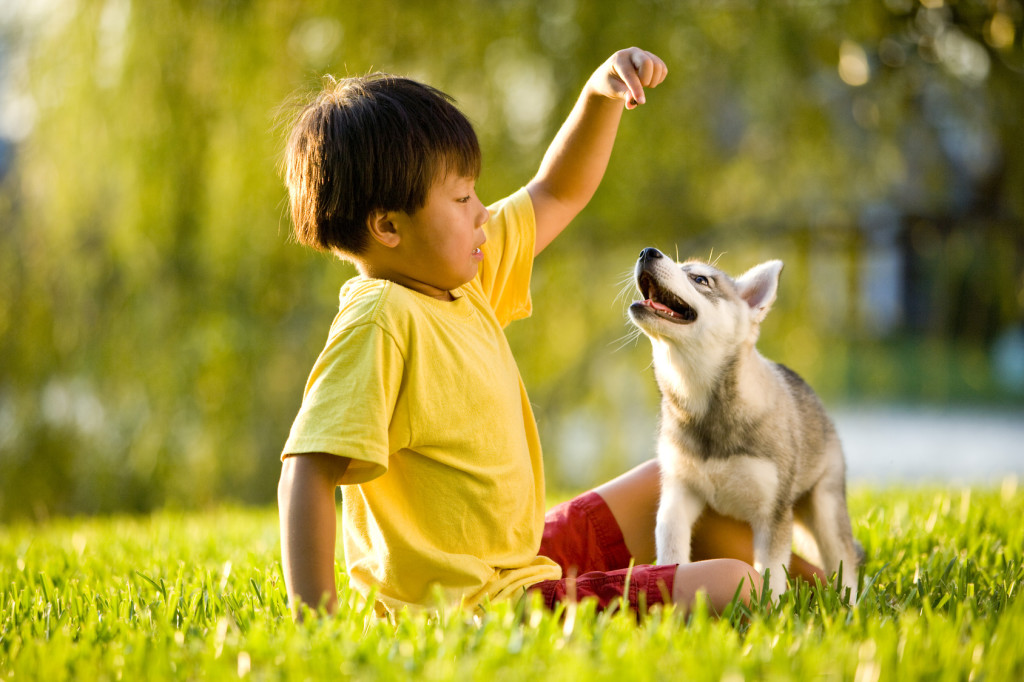 Young Asian boy playing with Alaskan Klee Kai puppy on grass