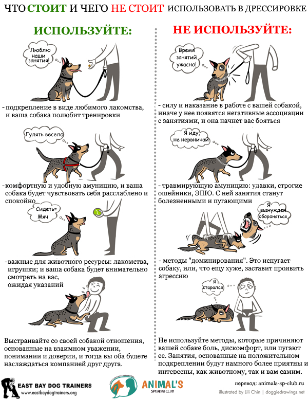 The-dos-and-donts-of-dog-training